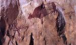 ภาพคนกำลังจูงวัวหรือกระทิง